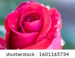 Single Romantic Red Rose With...