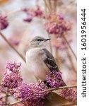 A Mockingbird In A Pink Tree