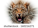 Stock photo jaguar attacking out of white background 160216271