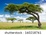 Green Trees In Africa  After...