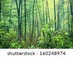 bamboo forest after rain | Shutterstock . vector #160248974