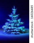 Individual Coniferous Tree On...
