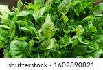 Garden Fresh Green Spinach...