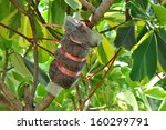 Tree Graft Is Agricultural...
