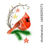 Red Cardinal Sits On Firtree...