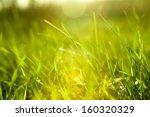 grass   Shutterstock . vector #160320329