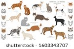 domestic cat breeds and hybrids ... | Shutterstock .eps vector #1603343707