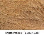 Angus Bull Fur Texture