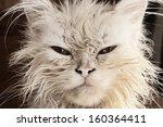 Stock photo wet kitten 160364411
