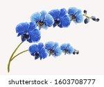 Beautiful Tropical Vintage Blue ...