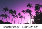 View Of Coconut Trees In Sunse...