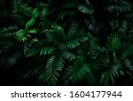 Fern Leaves On Dark Background...