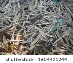 bamboo leaf brown texture... | Shutterstock . vector #1604421244