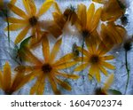 Jerusalem Artichoke. Flowers...