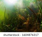 Underwater World. The Coastal...