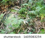 green grass leaf plant tree... | Shutterstock . vector #1605083254