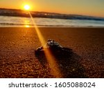 Baby Sea Turtle Being Released...