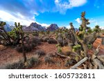 Winter In Red Rock Canyon  Nv
