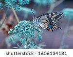 Closeup Beautiful Butterfly...