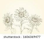 Three Sunflowers Drawing...