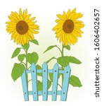 two sunflowers and blue fence...   Shutterstock .eps vector #1606402657