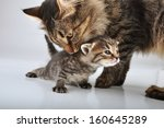 young 20 days old kitten with... | Shutterstock . vector #160645289