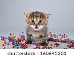 Stock photo little surprised funny kitten with small metal jingle bells beads studio shot 160645301