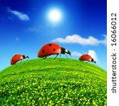 ladybugs go travel - stock photo