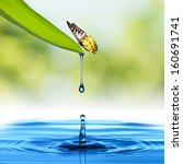 Water Drop From Green Leaf With ...