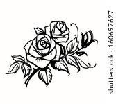 roses. black outline drawing on ... | Shutterstock .eps vector #160697627