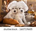 Miniature Schnauzer  In Chef's...