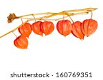 colorful  dry mini pumpkins on ... | Shutterstock . vector #160769351