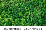 Small photo of Green clover leaf isolated for background. with three-leaved shamrock . St. Patrick's day vacation and holiday symbol.