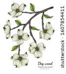 White Dogwood Flower And Leaf...