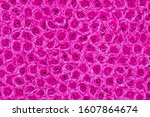 pink natural roses background ... | Shutterstock . vector #1607864674