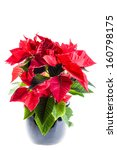 A Poinsetta Plant In A Black...