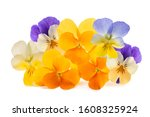 Pansy flowers pile isolated on...