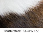 Animal Hair. Combination Of...