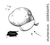 mango vector drawing. hand... | Shutterstock .eps vector #1608566491