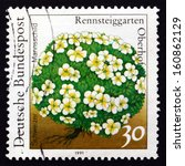 Small photo of GERMANY - CIRCA 1991: a stamp printed in the Germany shows Androsace, Androsace Helvetica, Schweizer Mannschild, Flowering Plant, circa 1991