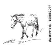 Hand drawn mule - stock vector