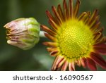 red flower closeup showing the... | Shutterstock . vector #16090567
