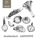 onion. botanical ilustration... | Shutterstock .eps vector #160935995