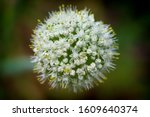 macro image.close up with the...