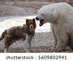 Unlikely pair.  canadian eskimo ...