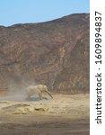 Small photo of The Desert Elephants live in the Kunene Region, encompassing mostly sandy desert, rocky mountains and arid gravel plains in Namibia's northwest - Skeleton Coast, Namibia