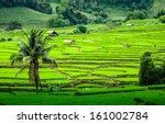 Terrace Rice Fields In Mae...
