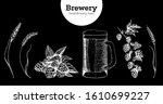 beer  hop and malt vector... | Shutterstock .eps vector #1610699227