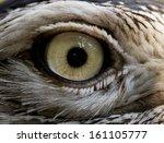 Close Up Of A Bird Eye