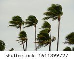 Palm Trees Swaying During A...